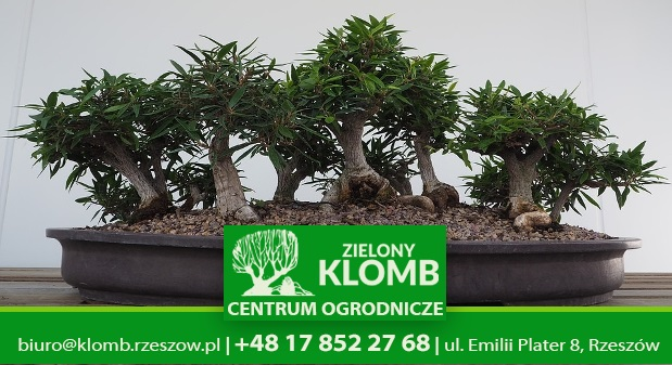 nawozy do bonsai