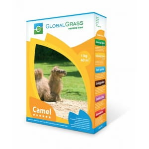 nasiona traw global grass camel