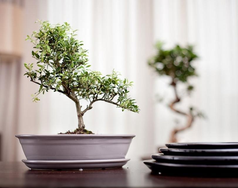 doniczki do bonsai ceramiczne